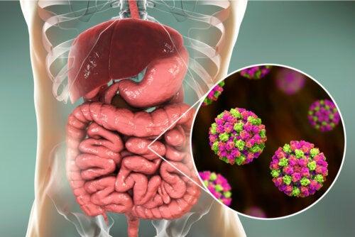 Infecciones por Escherichia coli: ¿cómo reconocerlas?