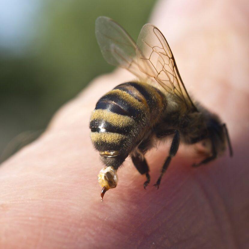 Un ciclista se tragó una abeja que lo picó en la garganta