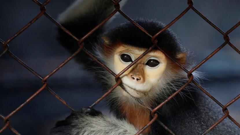 Un niño de 5 años pierde un dedo tras ser atacado por un mono