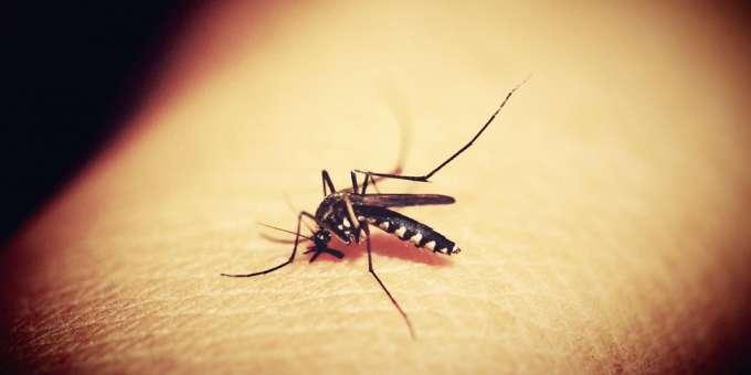 los patógenos resistentes de la malaria están comenzando a «volverse más comunes»